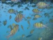 กระบี่ 7 วันที่ฝันไป ตอนที่8 เขาขนาบน้ำ แยกมนุษย์โบราณ เกาะพีพีดอน