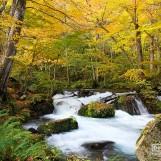เที่ยวญี่ปุ่น ใบไม้เปลี่ยนสี (7) เส้นทางลำธารโออิราเสะ Oirase Stream