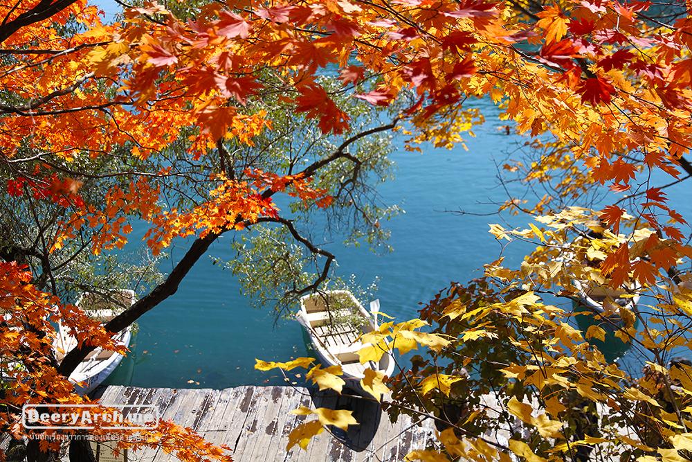 เที่ยวญี่ปุ่น ใบไม้เปลี่ยนสี (12) บึง 5 สี Goshikinuma